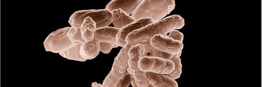 E. coli - Blasenentzündung und Antibiotika