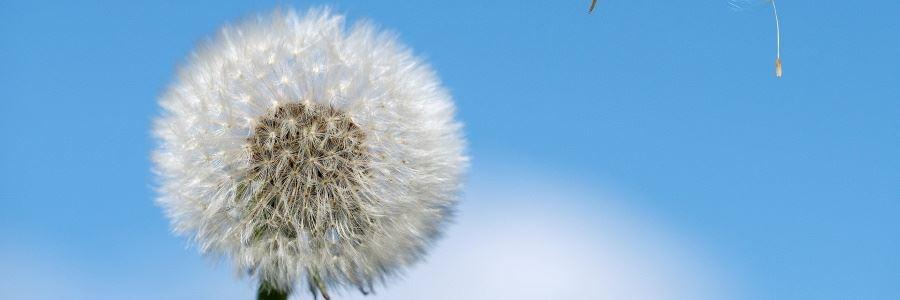 Wie wirken Medikamente gegen Heuschnupfen?